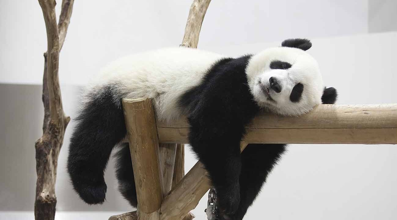 Google Panda Update – Google Search Algorithm Update Rolled out